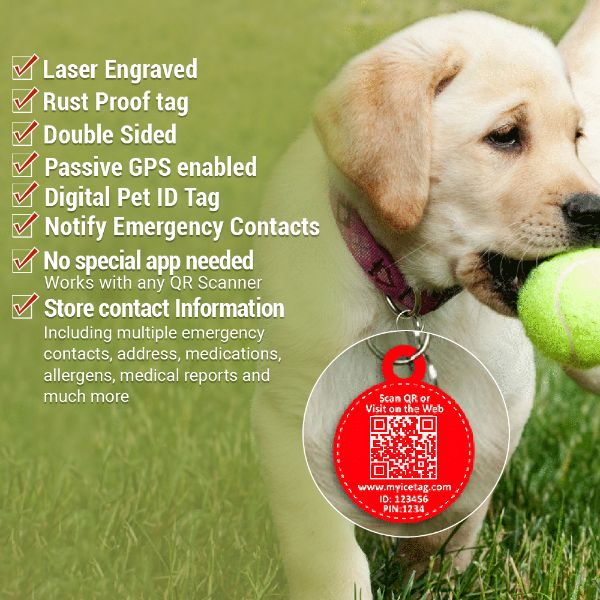 Digital Dog id tags.